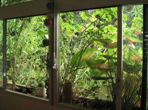 meu jardim e a mangueira
